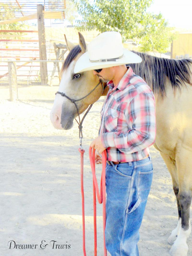 Buckskin Quarter Horse For Sale